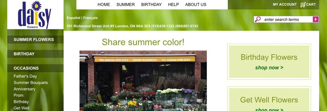 daisy-flowers-london-ontario