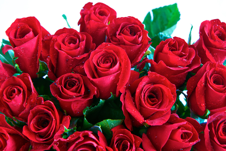 red-roses-750